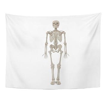 diagram of male skeleton amazon com emvency tapestry anatomy human male skeleton standing  emvency tapestry anatomy human male