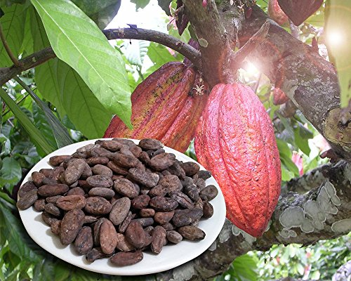 - Whole Cacao (Cocoa) Beans, 2 Lb, Fresh, Organic, Fermented, From an Organic Family Farm in the Dominican Republic.