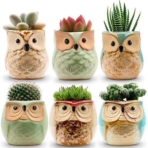 6 Cute Owl Ceramic Flower Pots for Small Plants