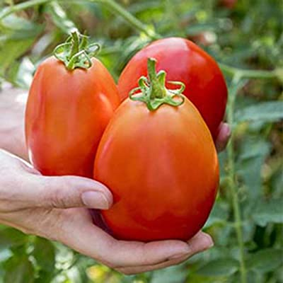 QiBest 50Pcs Garden Balcony Beautiful Vegetable Plants Strawberry Tomato Seeds Vegetables : Garden & Outdoor