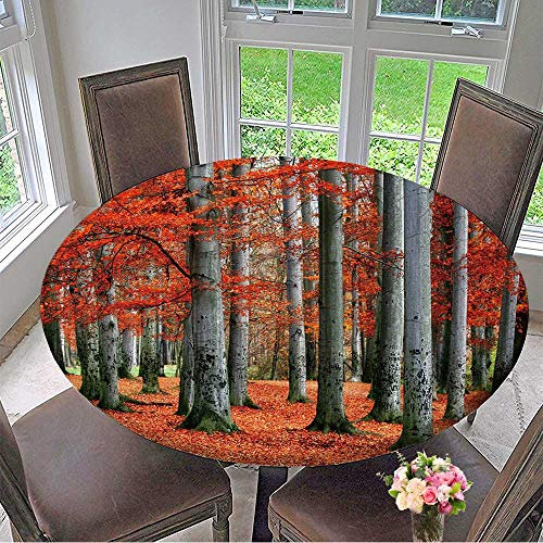 (Mikihome Round Premium Table Cloth Autumn Park of red Beech Trees. Perfect for Indoor, Outdoor 50