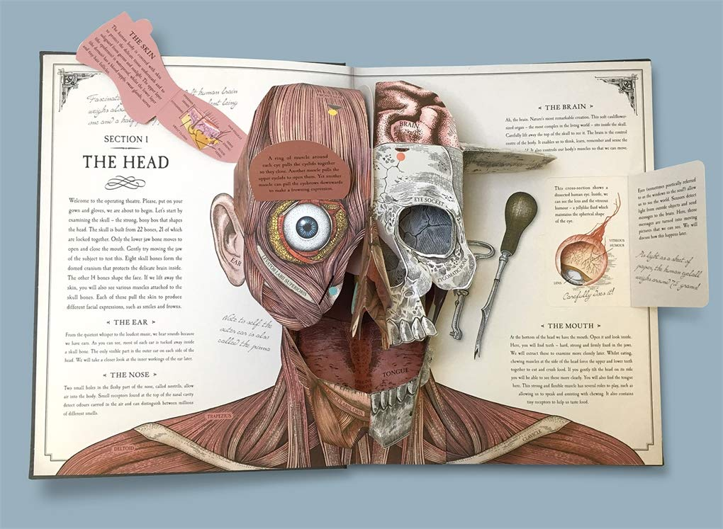 The Human Body A Pop Up Guide To Anatomy Rachel Caldwell