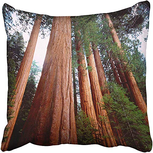 Tree Old Growth Sequoia Redwood Trees Cushions Case Throw Pillow Cover for Sofa Home Decorative Pillowslip Gift Ideas Household Pillowcase Zippered Pillow Covers 18X18 Inch