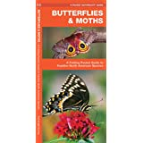 Butterflies & Moths: A Folding Pocket Guide to Familiar North American Species (Wildlife and Nature Identification)
