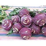 Early Purple Vienna Kohlrabi - 800 Seeds - BONUS PACK!