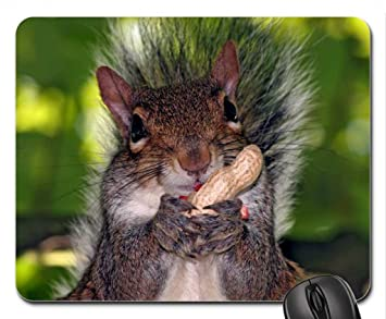 squirrel chewing his nutz mouse pad mousepad squirrels mouse pad