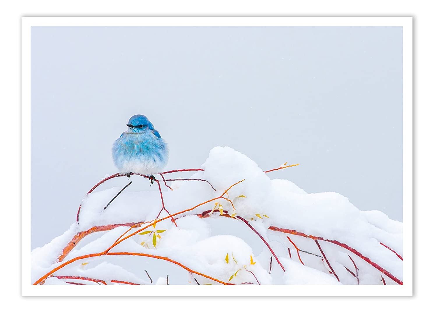 Amazon 12 Blue Bird In Snow Christmas Cards With Envelopes