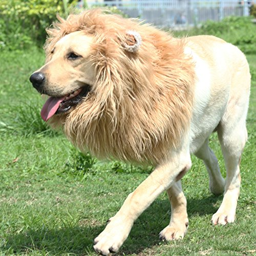Onmygogo Lion Mane Wig for Dogs with Ears, Funny Pet Costumes for Halloween Christmas (Size L, Brown)]()
