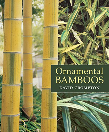Cheap  Ornamental Bamboos