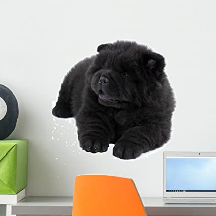 Amazon Com Wallmonkeys Puppy White Chow Chow Wall Decal Peel And