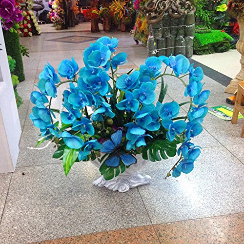 orchid-bonsai-balcony-flower-blue-butterfly-orchid-seeds-beautiful-garden-orchids-seeds