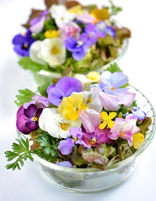 Variedad mezcla de plantas con flores comestibles - semilla: Amazon.es: Jardín