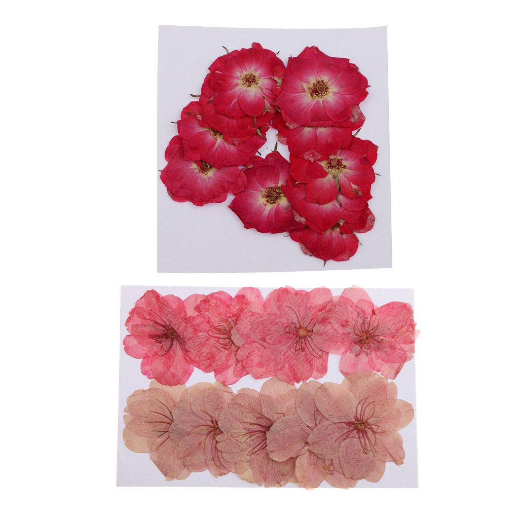Homyl 20 Pieces Mixed Size Real Pressed Dried Flowers Cherry Blossom & Rose Flowers Embellishments DIY Materials Card Making Jewelry Resin Crafts Scrapbooking Art Crafts Accessories