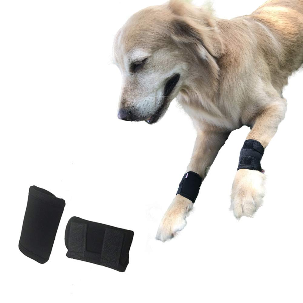 knee support for small dogs