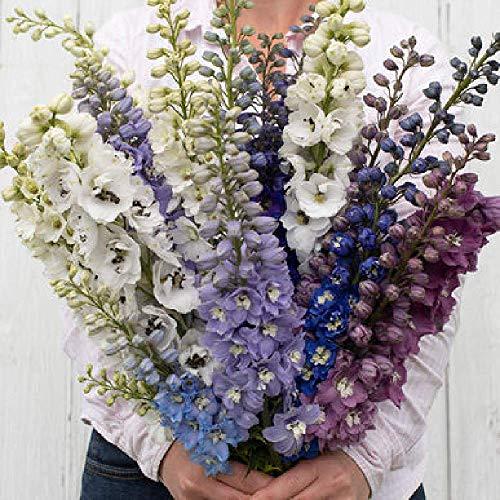 David's Garden Seeds Flower Delphinium Magic Fountain Mix SL (Multi) 50 Non-GMO, Open Pollinated Seeds (Delphinium Seeds)