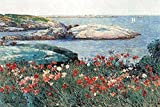 Buyenlarge Poppies, Isle of Shoals - Gallery Wrapped 44