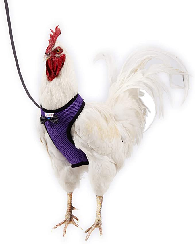Comfortable Breathable Suitable for Chicken Weighing About 6.6 Pound,Pink Adjustable Yesito Chicken Harness Hen Size with 6ft Matching Leash Large Size Resilient