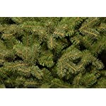 National-Tree-Downswept-Douglas-Fir-Tree