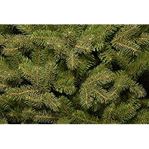 National Tree Downswept Douglas Fir Tree 2