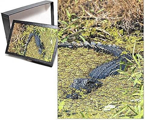 Photo Jigsaw Puzzle of USA, Florida, Orange City, St. John River, alligator - Alligator Puzzle