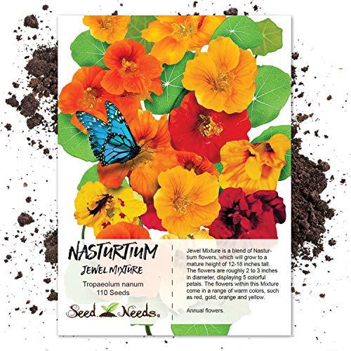 - Seed Needs, Jewel Mix Nasturtium (Tropaeolum nanum) 110 Seeds Non-GMO