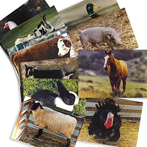 Farm Animal Posters Real Photo Classroom Decorations for Preschool Bulletin Boards & Circle Time