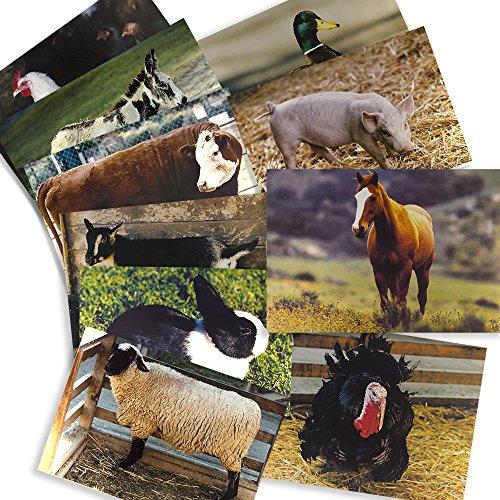 animal adaptations poster science bulletin board
