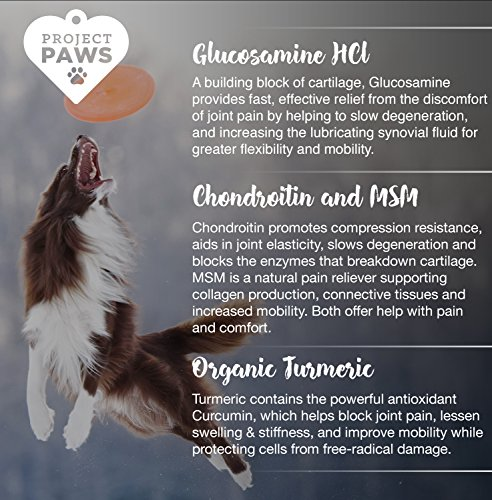 Project Paws Hip and Joint Supplement for Dogs - Dog Glucosamine Chews with MSM, Chondroitin and Organic Turmeric - 120 CT by Project Paws (Image #3)