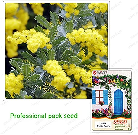 10 PCS Seeds Acacia Tree Flower Seed Decorative Courtyard Garden Free Shipping S
