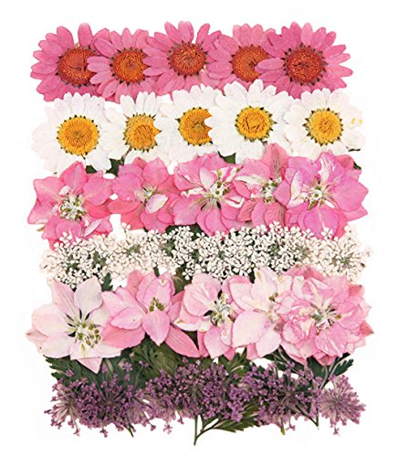 (Silver J Pressed flowers mixed pack, red rose, marguerite daisy, verbena, lace flower, rose buds, foliage)