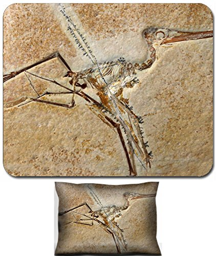 Liili Mouse Wrist Rest and Small Mousepad Set, 2pc Wrist Support The fossil of a Pterodactylus Elegans dinosaur from the late Jurassic period 148 million years old IMAGE ID 15659341