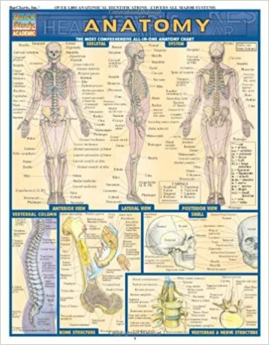 Anatomy (Quickstudy Reference Guides - Academic