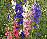 Rocket Larkspur Mix Premium Fresh Delphinium Seeds #250 (150 Seeds, or 1/2 Gram)