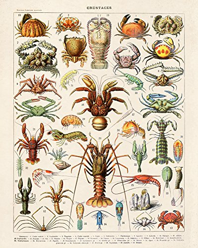 ench Crustaceans Diagram Chart by Adolphe Millot Poster Reproduction Print Lobster Crab ()