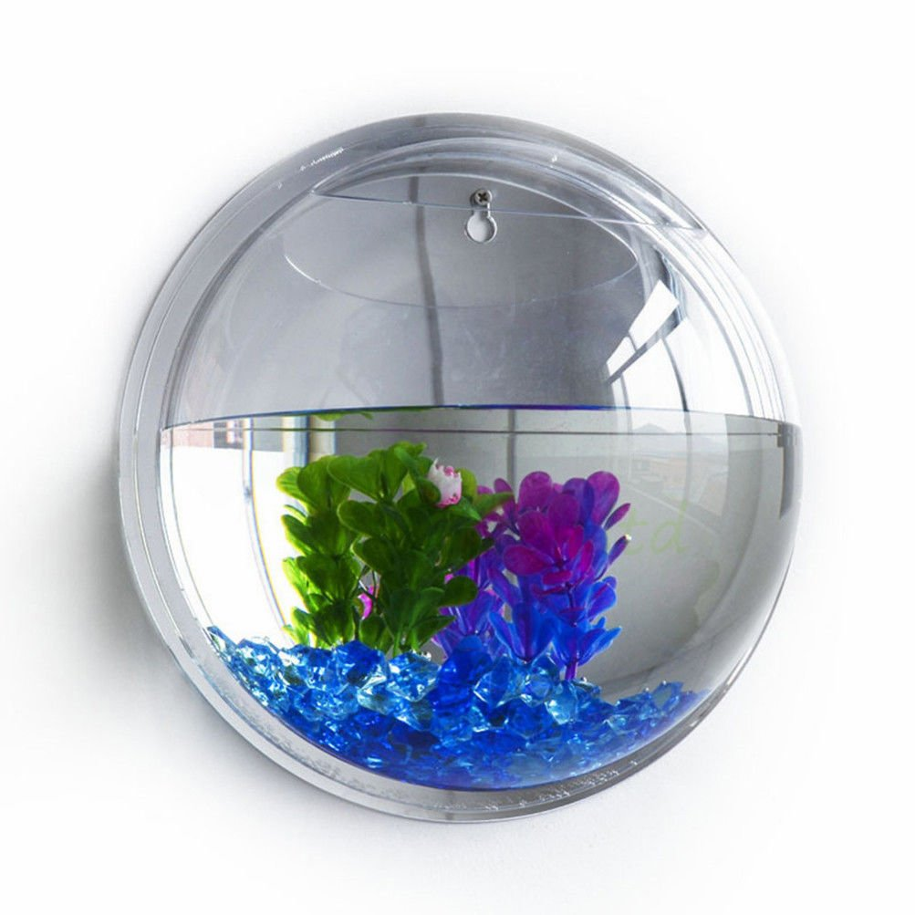 Amazon.com : Fish Bowl Wall Mount Betta Tank Aquarium Round Hanging 1  Gallon Bubble Acrylic/ M : Sports & Outdoors
