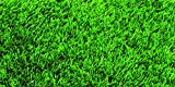 Nature's Seed Bermudagrass Seed Blend, 5000 sq. ft.