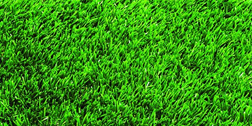- Nature's Seed TURF-CYDA-2000-F Bermuda Grass Seed
