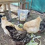 11lbs Bulk Non-GMO Dried Mealworms for Reptile, Tortoise ; Amphibian,Lizard ;Wild Birds; Chichens; Duck etc 18