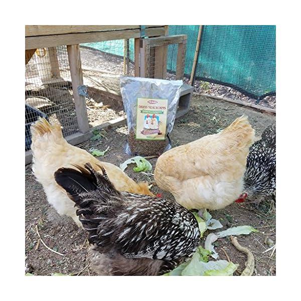 11lbs Bulk Non-GMO Dried Mealworms for Reptile, Tortoise ; Amphibian,Lizard ;Wild Birds; Chichens; Duck etc 9