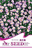 1 Original Pack, 50 seeds / pack, Aster Novi Belgii New York Aster Flower Seed