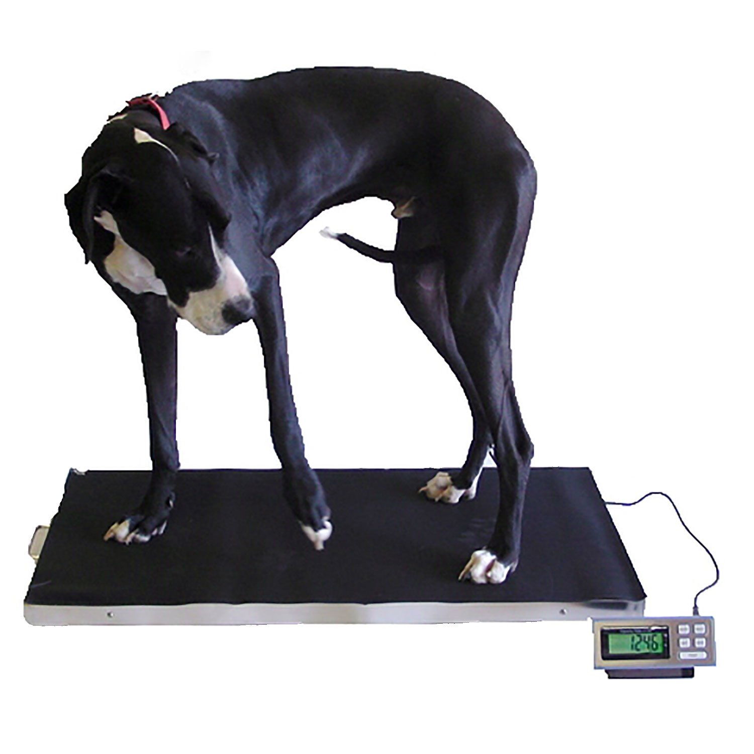 700 LB x 0.2 LB 44 x 22 Inch Extra Large Platform Vet Veterinary Animal Livestock Dog Goat Calf Pig Sheep 4H Digital Scale NEW