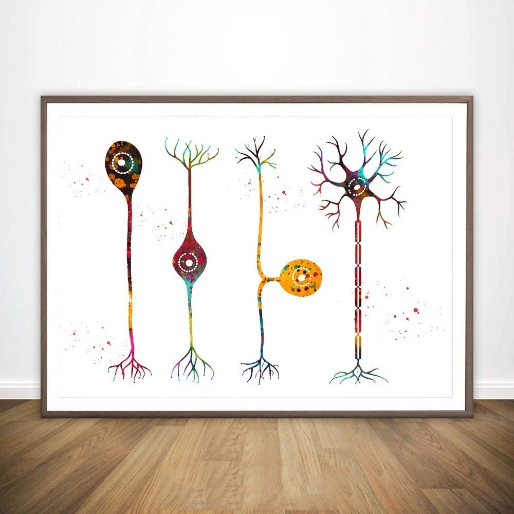 HNTHBZ Pittura Tela Ossa del Piede Quattro Tipi di neuroni a Mano vasi sanguigni Muscoli del Corpo Umano anatomico mediche e la Scienza Poster Home Office Decor No Frame Hanging Dipinti