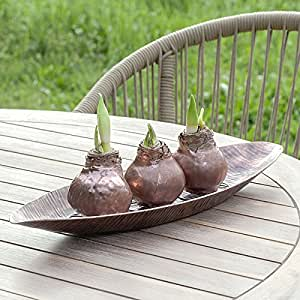 Jackson & Perkins Waxed Amaryllis in Copper Tray - Set of 3