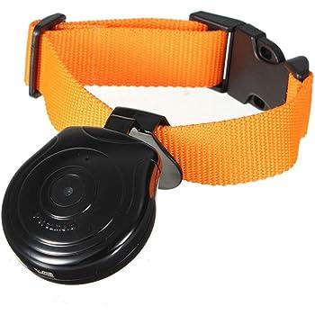 Amazon Com Digital Pet Collar Cam Camera Dvr Video