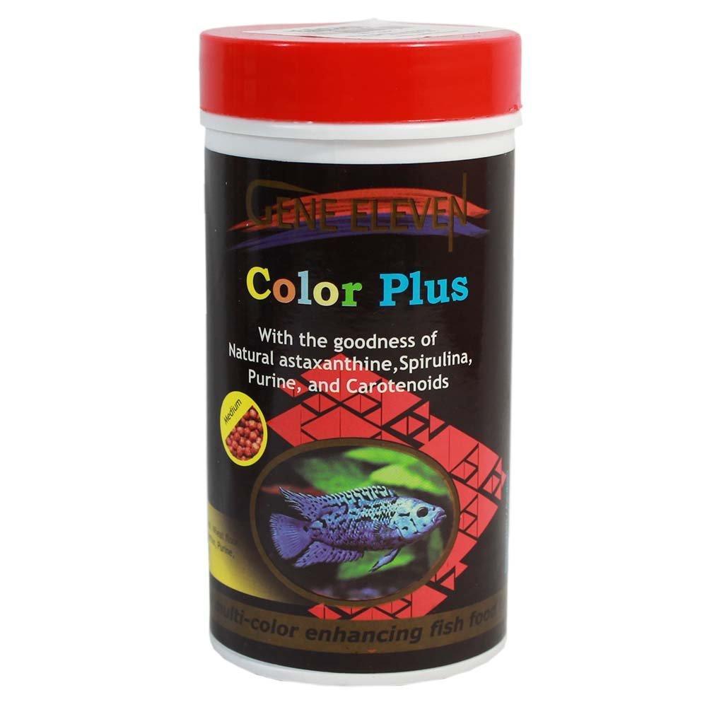 Buy Cichlit Special Fish Food (100gm) - Color Plus - Aquarium Fish ...