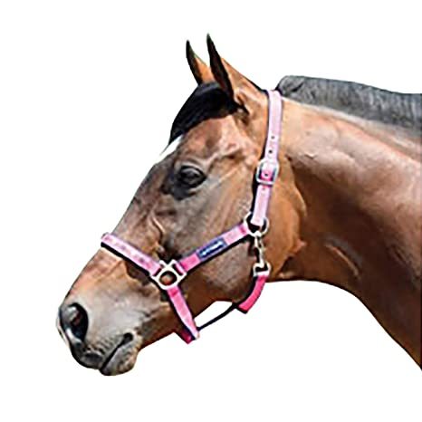 Amazon Com Harry Hall Galaxy Horse Head Collar Pink Pony