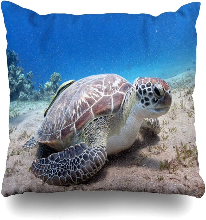 Ahawoso Throw Pillow Cover Sand Brown Reef Green Turtle Chelonia Mydas Eating Seagrass Coral Nature Water Aqua Design Natural Home Decor Pillow Case Square Size 20x20 Inches Zippered Pillowcase