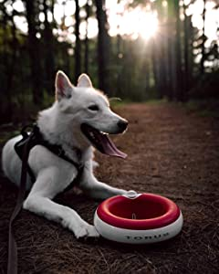 Torus Pet Water Bowl - 2-Liter - Fresh Filtered Water - Healthy & Hygienic Pet Bowl - for Small, Medium, Large Dogs, Cats & Other Pets - Red with 6 Filters