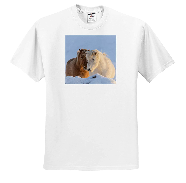Horses Icelandic Horses in South Iceland 3dRose Danita Delimont Adult T-Shirt XL ts/_313639