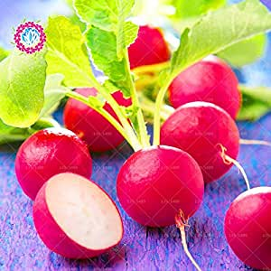 11.11 Big Promotion!100 pcs/lot radish seeds green vegetable seed carrot potted in garden&home fresh annual herb plant seeds 2